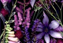 Purple /paars / Flowers and ideas
