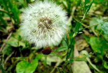 фото / просто разные фото,для души,и от души,я просто любитель,люблю фотогрфировать природу,приятного просмотра.