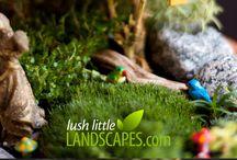 Miniature Garden / Amazingly beautiful mini garden