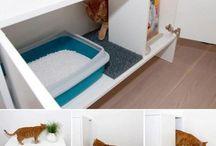 Cucce gatti
