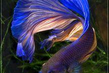 pesci tropicali d acqua dolce