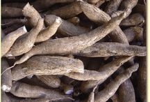 Cassava / Everything you wanted to know about Cassava