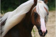 Nature's beauties -animals