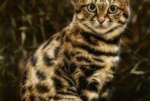 CAT ATTACK FELINE DIVA