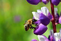Blumen - Flowers / Blumen im Gatterhof Garten bzw. im Kleinwalsertal