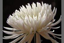 Gardening: Flowers... / by Laura Huffman