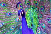 Everything Peacock