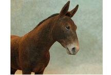 Miniature donkeys, mules and horses