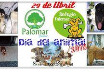 EVENTOS / Galeria Multimedia relacionada a Eventos de Ciudad Palomar.
