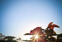 Flores e Jardins / Flores e jardins fotografados por Emi Paixão