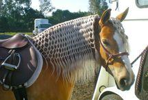 Sick horse manes
