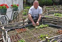 KG's garden ideas