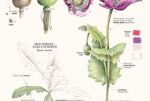 Строение растений