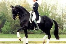 Help your Riding / Learning how to stack yourself up and carry more of your own weight will allow your horse to move more beautifully
