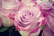 mi floris / arte floral las Palmas