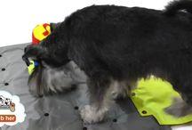 Hundens legeplads
