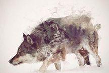 × vlci ×