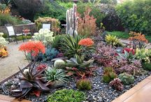 Plants & Garden Bed Ideas