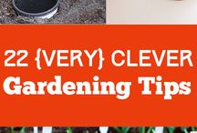 Gardening Ideas / garden plants, diy garden, outdoors, plants, planting