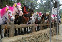 Le Baguio et Tagaytay / Chevaux locaux des Philippines, le Baguio et le Tagaytay, qui en sont les deux principaux types, sont issus de divers croisements entre des chevaux importés sur les îles. Principalement sollicités pour le loisir ou le tourisme équestre, la crinière est parfois teinte en rose afin d'attirer les touristes.