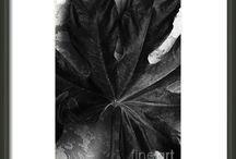 Black and White Photos / Black and white photos for sale.