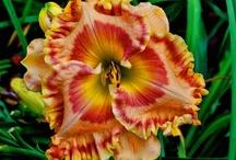 Flowers that I love / gardening