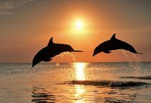 Sunsets with Dolphins