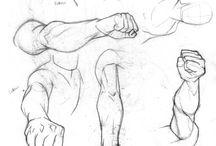 arm anatomy referance