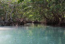 Laguna de Términos: paraíso natural de Campeche