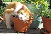 plantas gatos