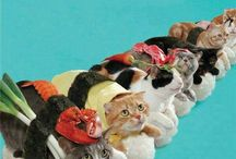 crazy cat lady / #cats #kittens #gatos #chats / by Marina Molares