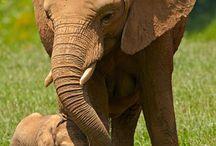 Elephants / by Debbie Hein