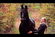Sweet Stories About Horses!