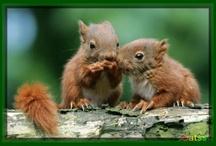 Écureuils  / Écureuils trop mignons
