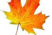 Φθινόπωρο_Φύλλα