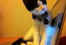meow kitty meow