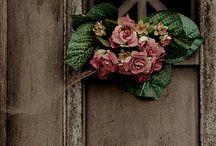 Window Boxes / by Victoria Feinhor