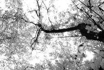 Autumn / A passeggio nel castagneto di Nonna Pia