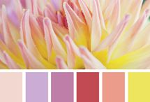 Colors pallets I like  / by Alyssa Thompson