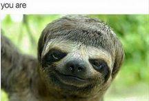 Sloth-a-palooza