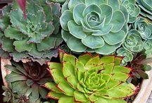 My Secret Garden / by Esther Reser