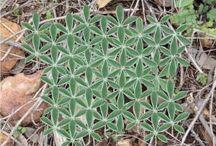 Geometri og natur