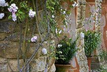 Garden / by Nancy Littlefield