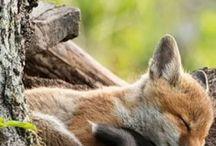 •● FoxBox ●•