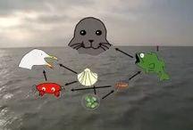 Lesideeën voor de basisschool / Mooi vormgegeven materiaal over zeehonden en de Waddenzee. Sluit aan bij het curriculum van het basisonderwijs.