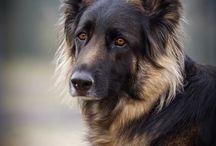animals-dogs