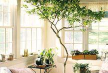Pflanzen@home