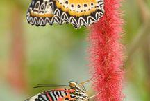 Côté Papillons