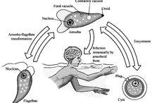 Amip ăn não người xuất hiện trong nguồn nước sinh hoạt / Amip ăn não người xuất hiện trong nguồn nước sinh hoạt: http://sawa.vn/May-loc-nuoc-RO-Loai-bo-Amip-an-nao-nguoi.htm