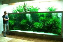 fish tank ideas